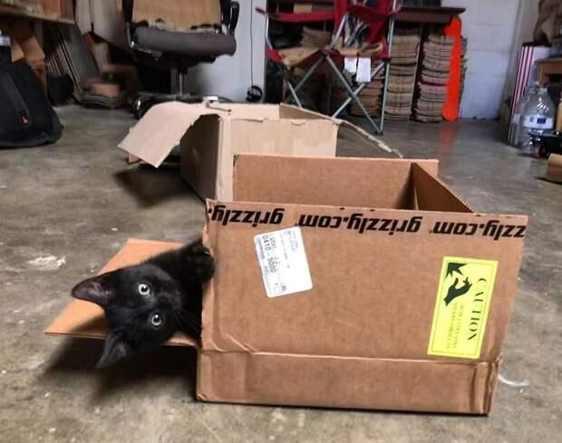 Он прятался за мусорным баком… Но увидев человека, котёнок стремглав бросился ему навстречу!