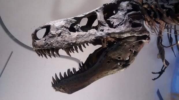 Если бы динозавры не вымерли 20