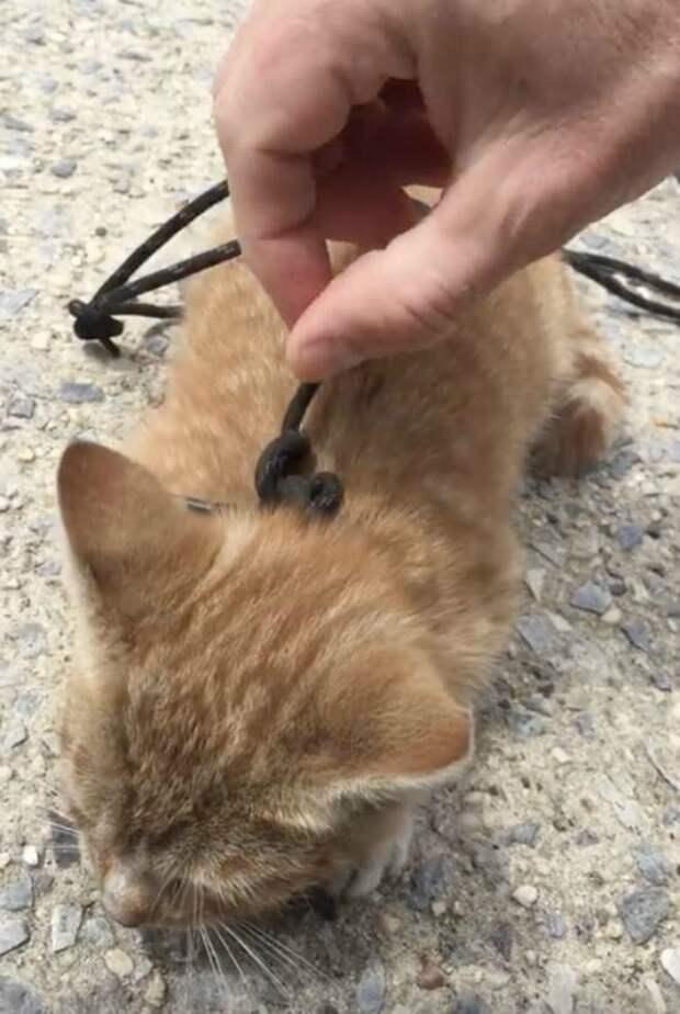 Котенок полз по тротуару с перевязанной шнурком шеей история, история спасения, котенок, коты, котята, кошки, помощь животным, спасение животных