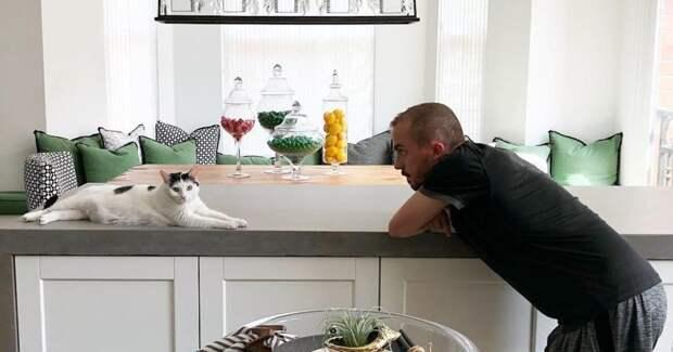 Коты-террористы: усатые, которые умудрились причинить нешуточный ущерб