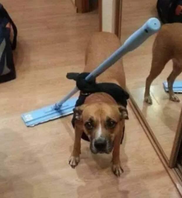Собака - помощник человека