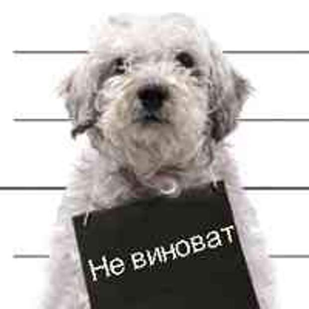 Виноватый взгляд вашей собаки не выражает чувство вины, а страх