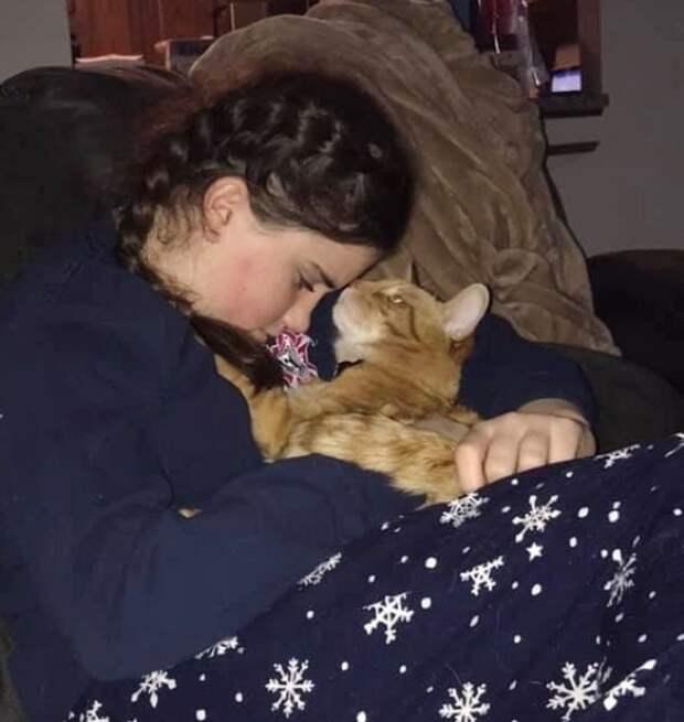 Семья отправилась на концерт, а домой вернулась с котом в руках
