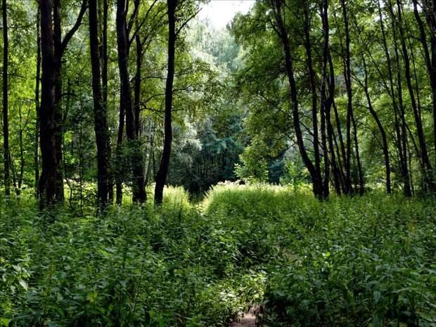Алешкинский лес и предание о призраке черного монаха