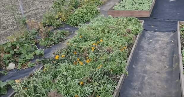 Отличное средство для плодородности почвы