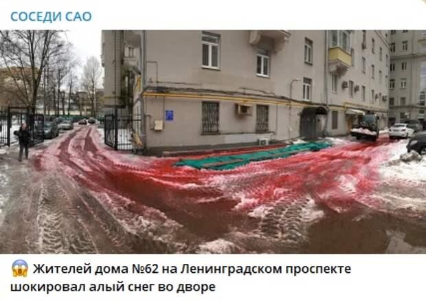Управа раскрыла тайну кровавого снега на Ленинградском проспекте