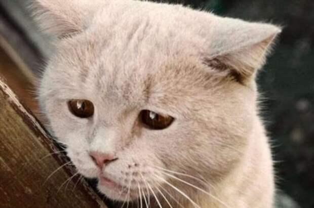 Почему слезы соленые и помогают справиться со стрессом?
