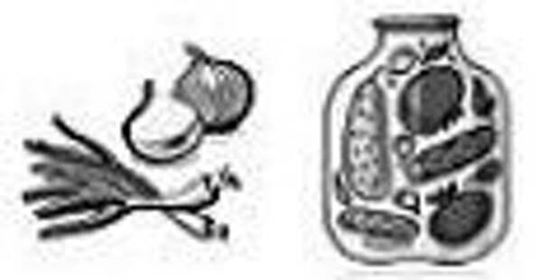 10 лучших сортов и гибридов репчатого лука