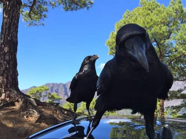 25 невероятных фактов о животных голос природы, животные, занимательная зоология, зверюшки, интересно, неожиданно, познавательно, факты