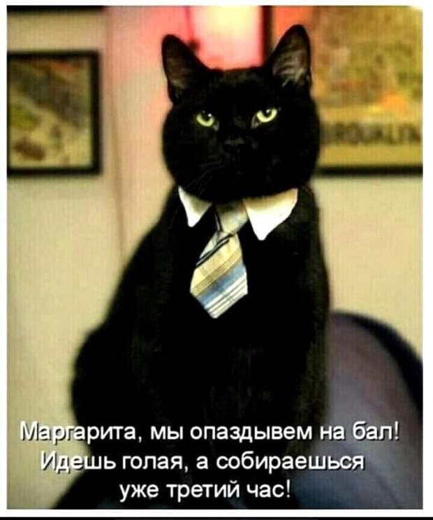 Женщина - это домашнее животное, за которым надо ухаживать...