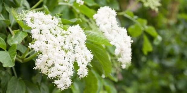 10 растений, которые обладают противовирусными свойствами