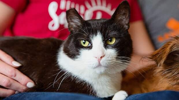 Волонтёры планировали найти котику дом, но однажды зашли в комнату и увидели его лежащим без движения