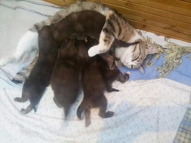 Мать-героиня животные, история, коты