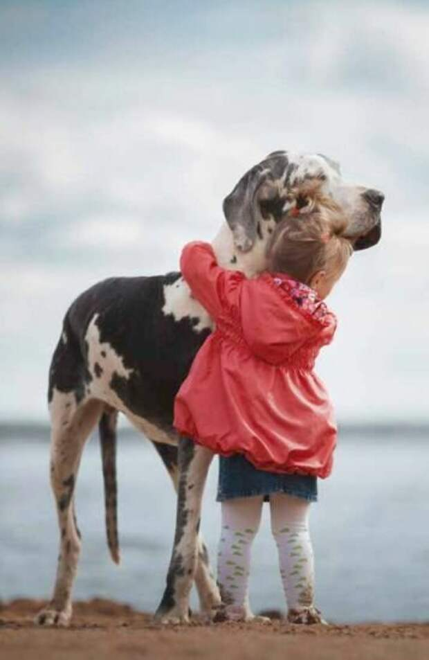 Малышка и дог. Фото из сети