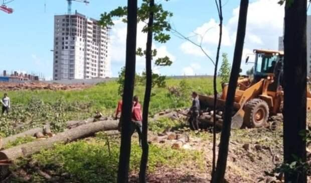 Вырубкой деревьев уЩелоковского хутора ради ЖКзаинтересовался парламент