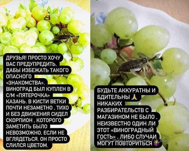 ВКазани скорпион выполз измагазинного винограда иужалил женщину