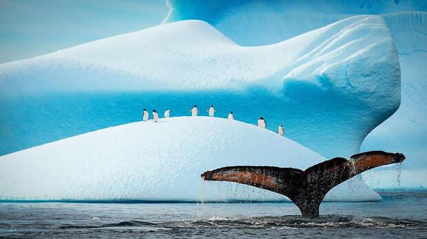 Величественная красота китов