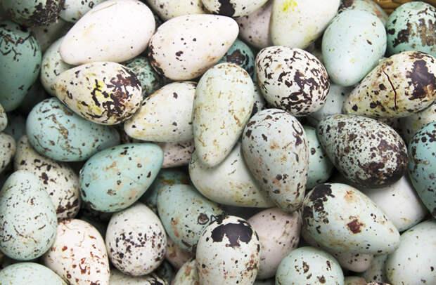 Почему у некоторых птиц яйца грушевидной формы?