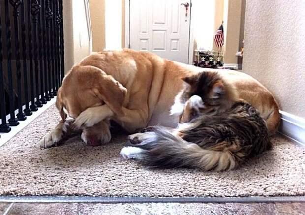 """Собаки, которым нужна """"перезагрузка"""""""