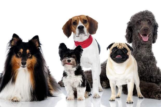 Ученые нашли различия в строении мозга собак разных пород