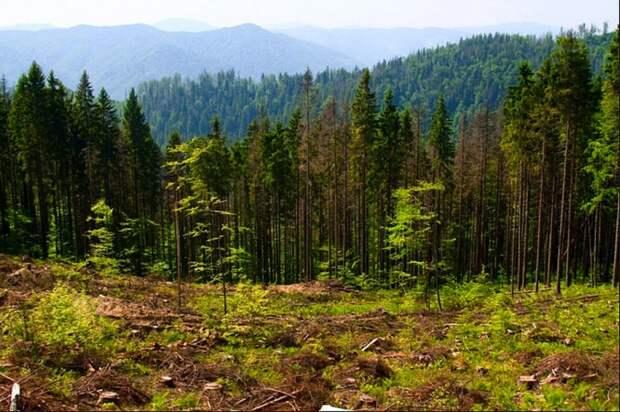 На Земле полно мест, где можно разместить 1,2 триллиона деревьев.