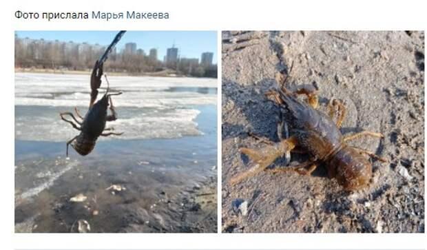 В канале имени Москвы завелись раки