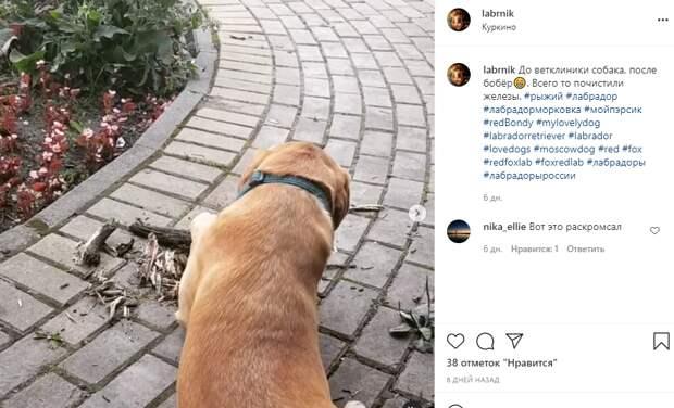 Фото дня: собака-путешественник обучает навыкам выживания