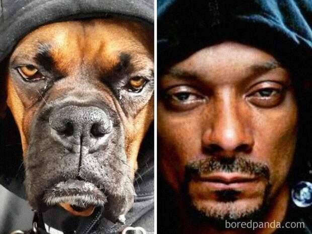 30 собак, похожих начто-то другое