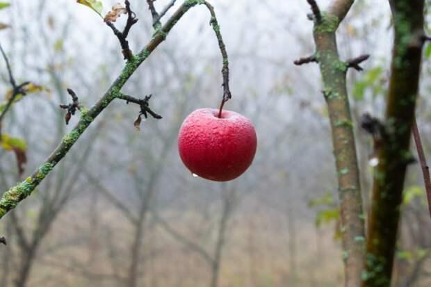 Календарь обработки сада от болезней и вредителей