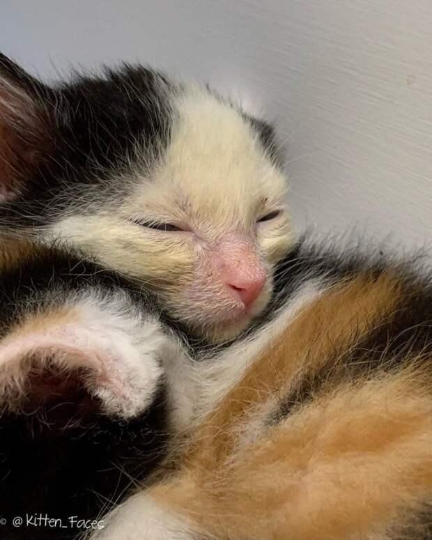 В мусорном пакете боролись за жизнь хрупкие котята истории спасения, история спасения, котята, кошки, спасение животных