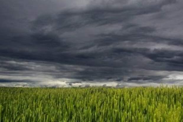 Погода на 5 мая: пасмурно