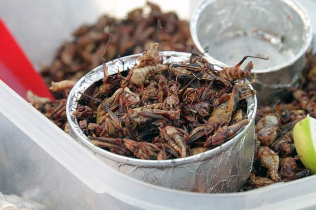 «Необычно, нополезно»: наприлавкахРФ появятся хлеб имясо изнасекомых
