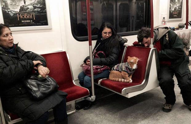 Самые очаровательные пассажиры, которых можно встретить во время поездки (20 фото)