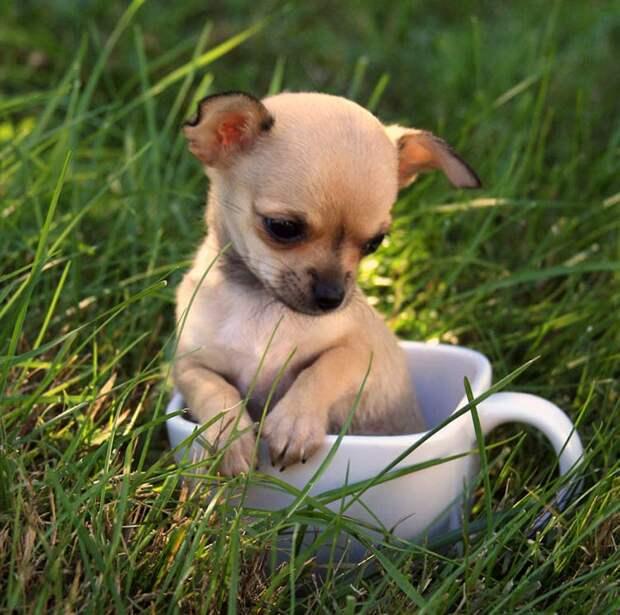 фото милых животных