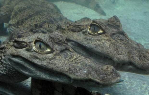 В Ялте эвакуируют крокодилов