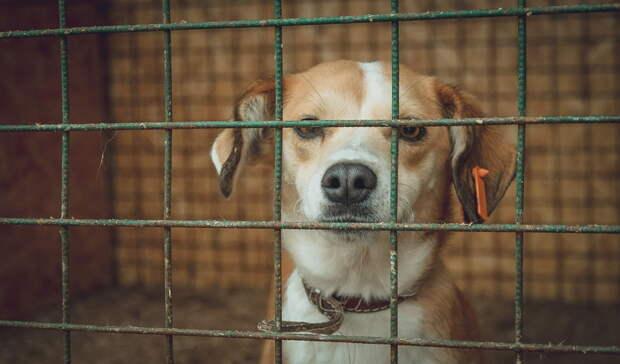 Названы районы Башкирии, которые не освоили деньги на отлов бездомных животных