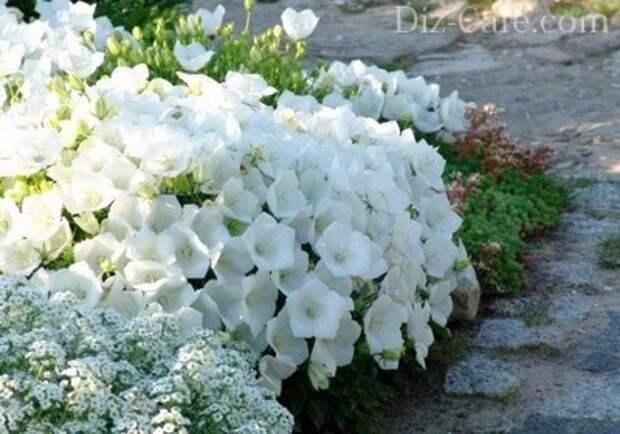 Фактурность монохромного цветника