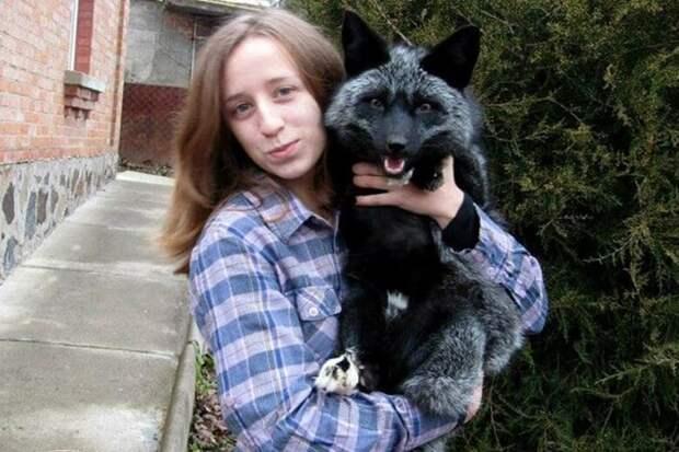 Щенка чёрной лисицы нашли на дороге, и решили, что он обычный котёнок. Но когда его привезли в питомник, то все узнали правду о нём
