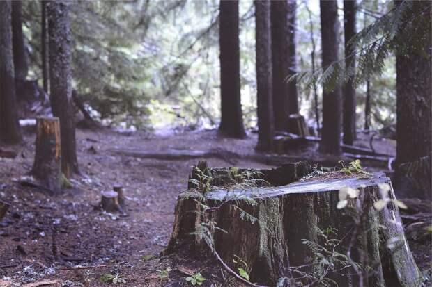 Итоги дня: защита леса от прокладки дороги в Ижевске и первые заморозки в Удмуртии