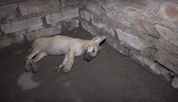 Щенок в подвале