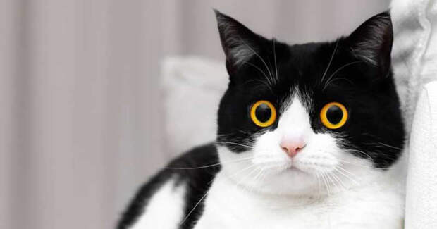 Эти глаза напротив: кот Иззи, отвзгляда которого невозможно оторваться