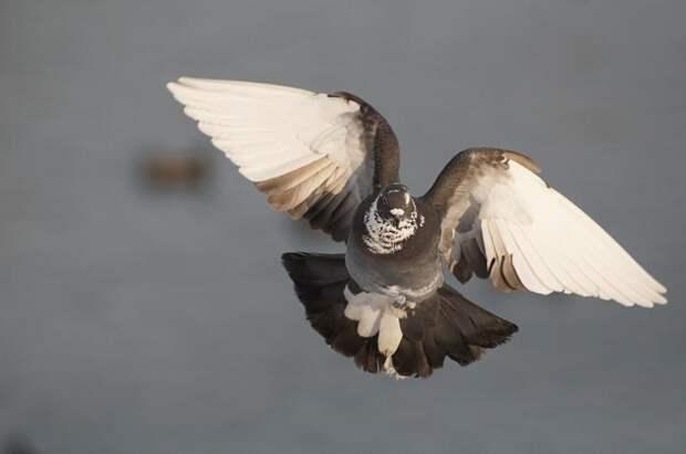 Красиво снимаем птиц