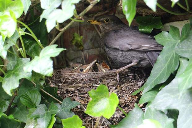 В парке «Кузьминки-Люблино» краснокнижные птицы вывели потомство