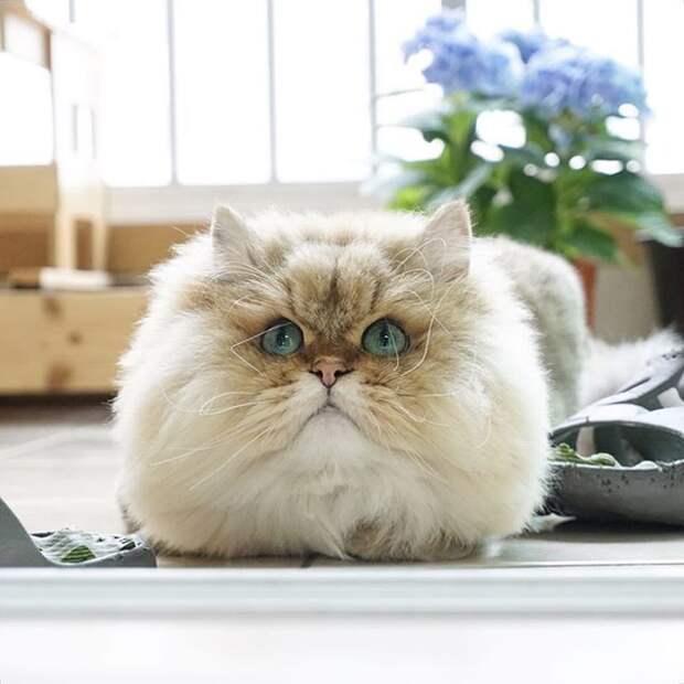 Эти милые котики и кошечки