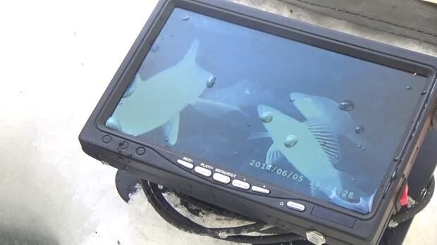 Есть камера ЯЗЬ - в рыбалке ты князь!