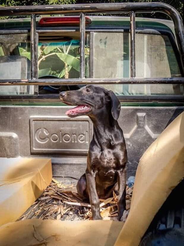 Обезвоженная бродячая собака благодарит спасателей