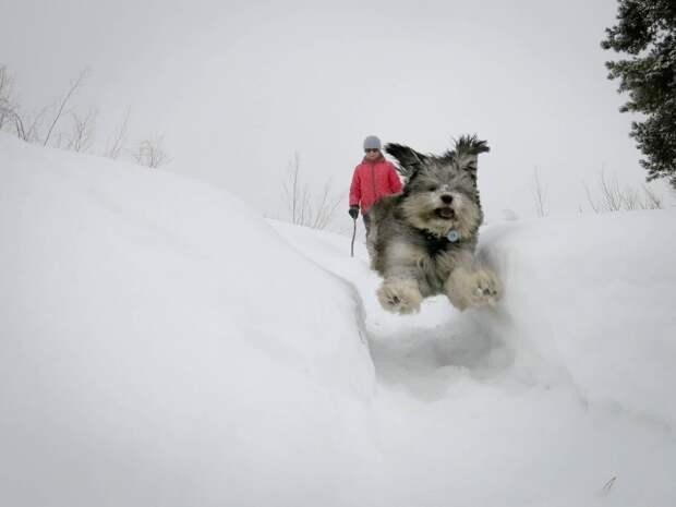 Семья тосковала по собаке и однажды люди решились отправиться за щенком в лес…