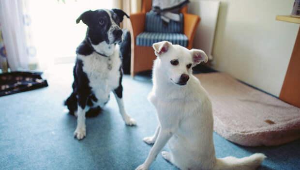 Домашние собаки. Архивное фото