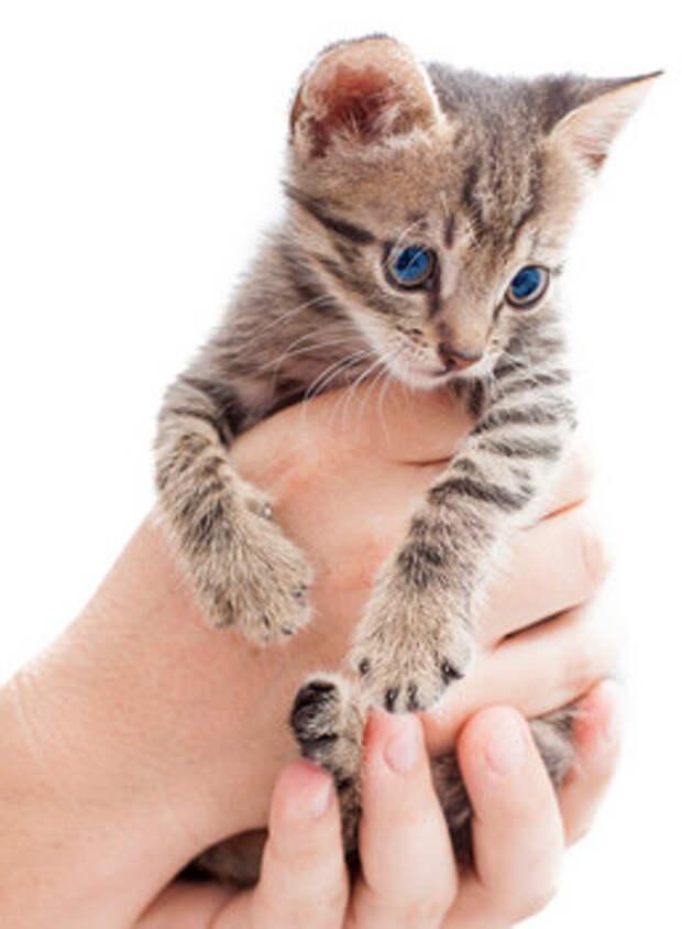 Куда можно отдать кошку или котенка