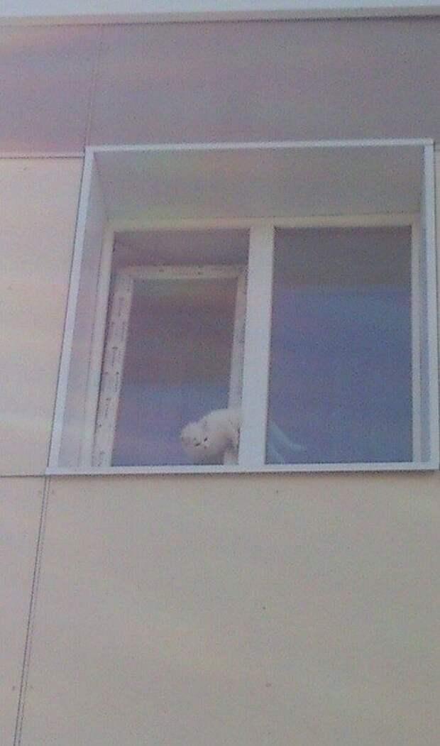«Сделайте хоть что-нибудь!» На Сахалине кошка застряла в окне третьего этажа и 2 дня ждала помощи…